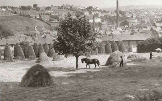 Haymaking in the Summer of 1951